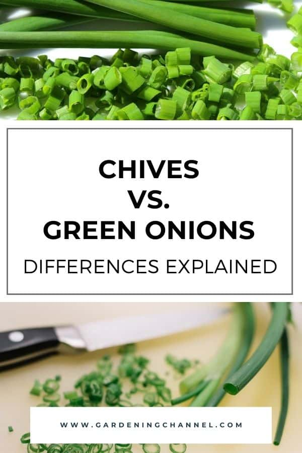 green onions and chives diced with text overlay chives versus green onions differences explained
