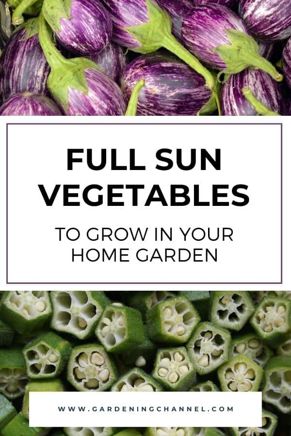 eggplant and okra harvest with text overlay full sun vegetables to grow in your home garden