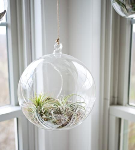 Clear glass hanging terrarium