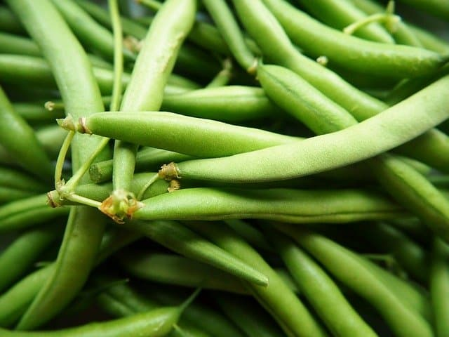 growing green beans in the garden
