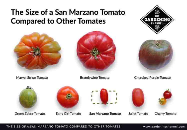 San Marzano tomato comparison