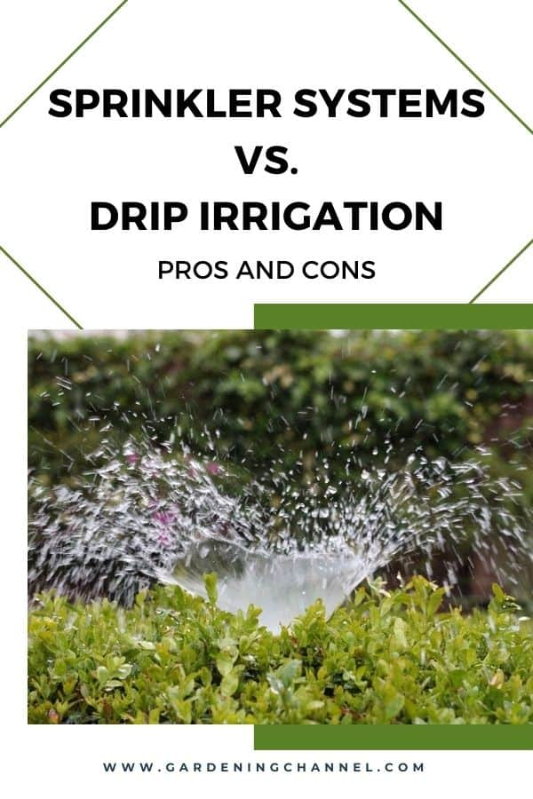 sprinkler watering plants with text overlay sprinkler systems versus drip irrigation pros and cons