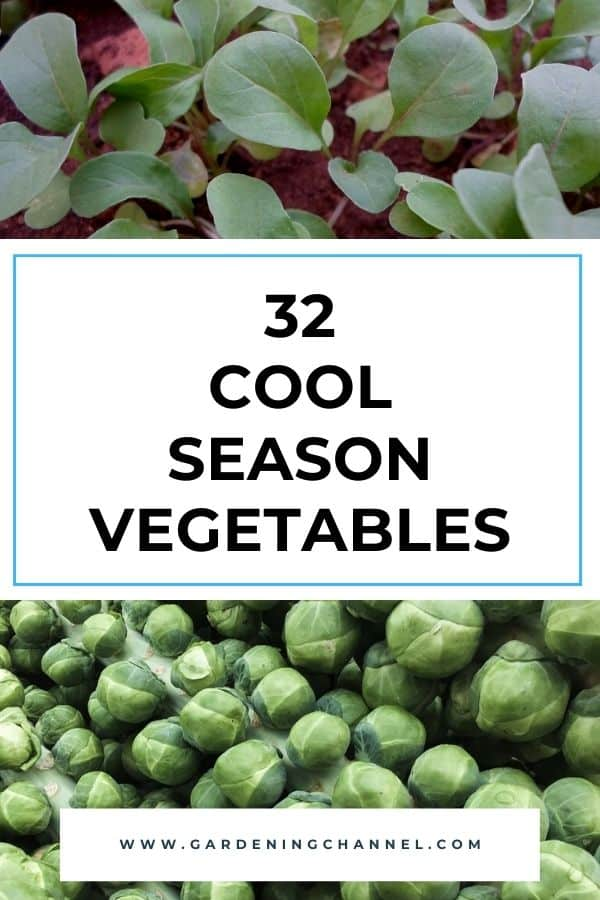 arugula and brussels sprouts with text overlay thirty two cool season vegetables