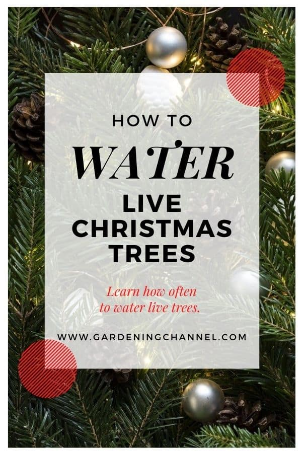 christmas tree with text overlay how to water live christmas trees learn how often to water live trees