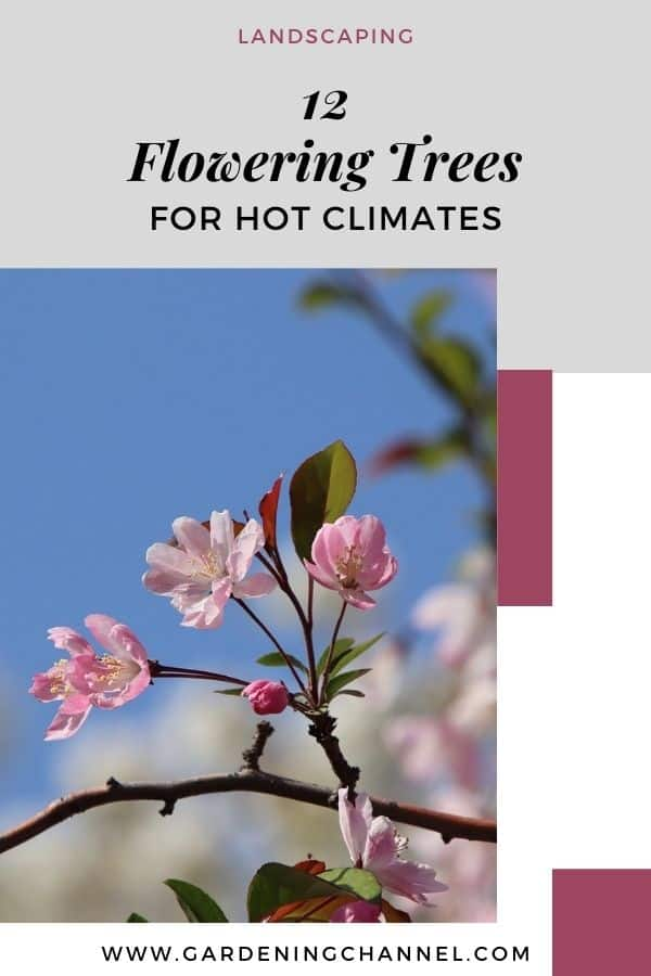 blooming crabapple tree with text overlay twelve flowering trees for hot climates