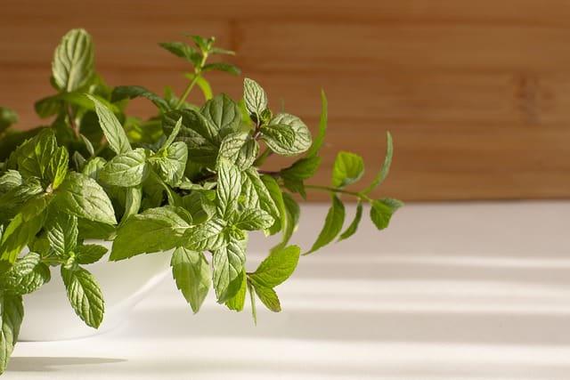 plante à la menthe à l'intérieur