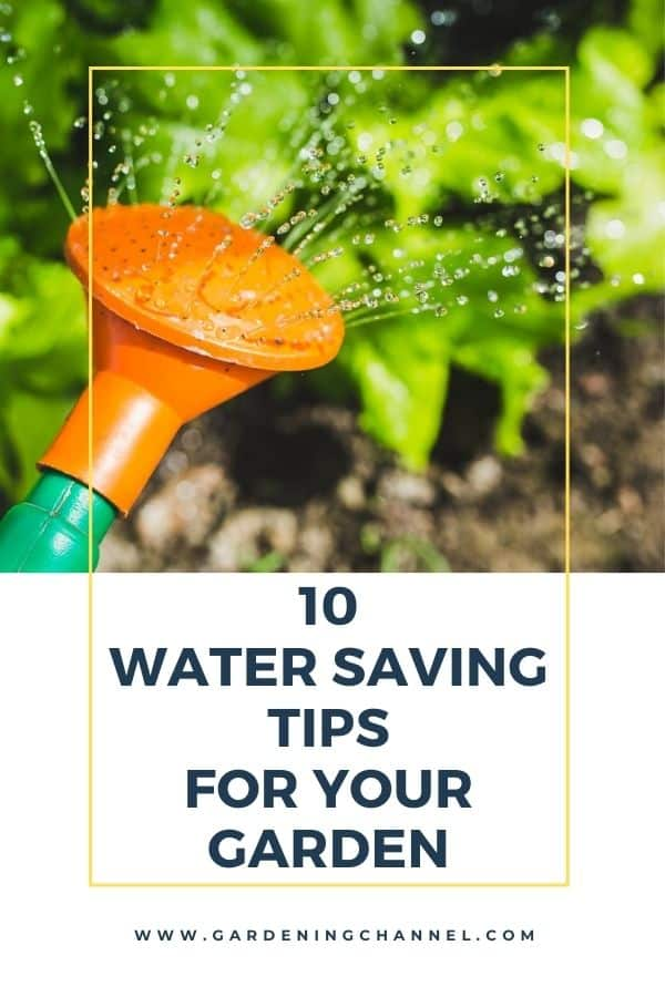 watering can garden with text overlay ten water saving tips for your garden