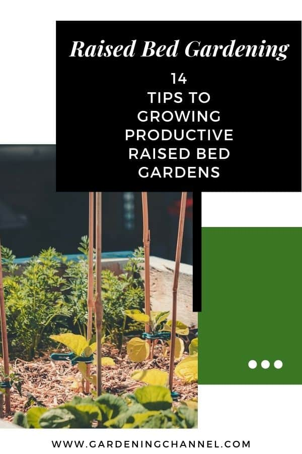 raised bed vegetable garden with text overlay raised bed gardening fourteen tips to growing productive raised bed gardens