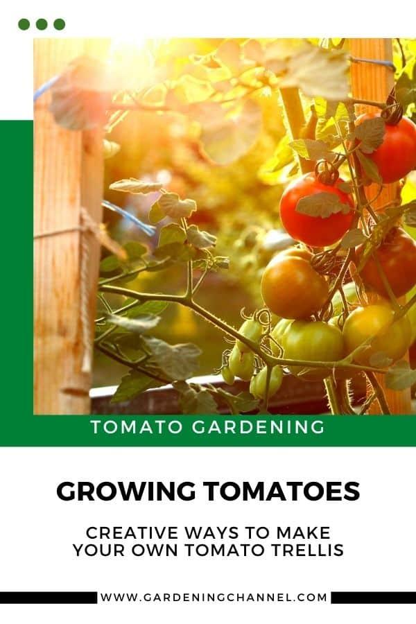 tomato plants in garden with text overlay tomato gardening growing tomatoes creative ways to make your own tomato trellis