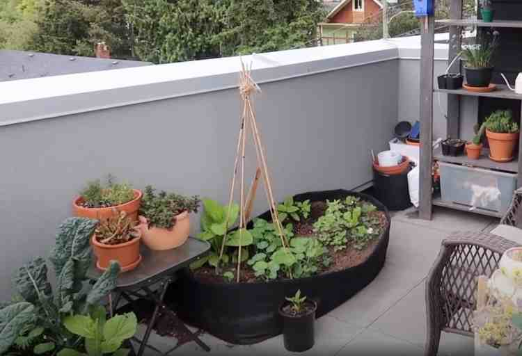 container vegetables on a patio growing