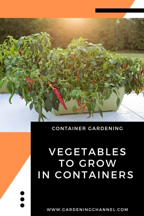 peppers in container on patio with text overlay container gardening vegetables to grow in containers