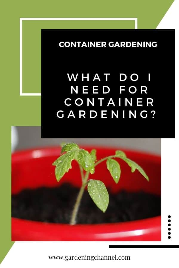 tomato growing in container with text overlay container gardening What Do I Need for Container Gardening?