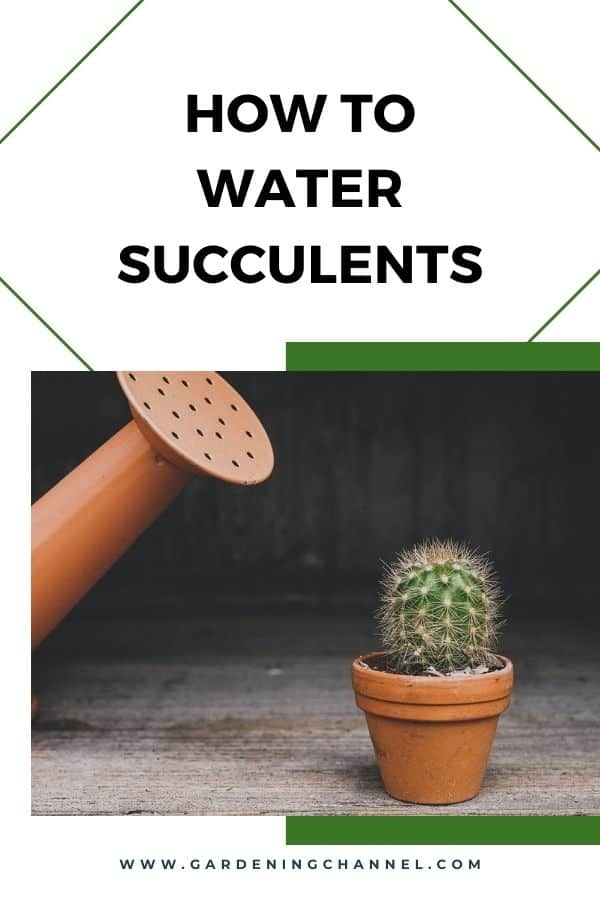 watering can and cactus with text overlay how to water succulents