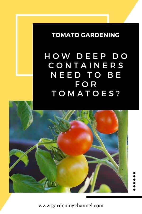tomatoes growing in container with text overlay tomato gardening how deep do containers need to be for tomatoes