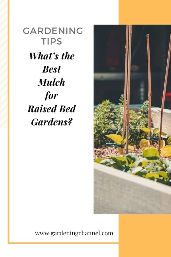 raised bed with text overlay gardening tips what's the best mulch for raised bed gardens