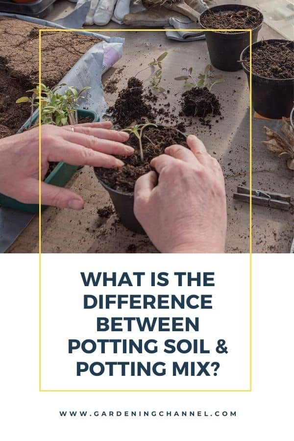 potting tomato plants with text overlay What is the difference between potting soil and potting mix?