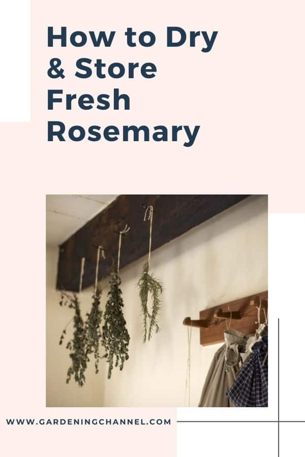 harvested rosemary drying with text overlay how to dry and store fresh rosemary