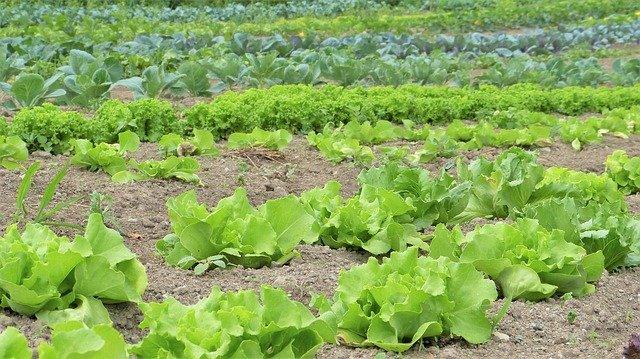 vegetable garden fertilizers
