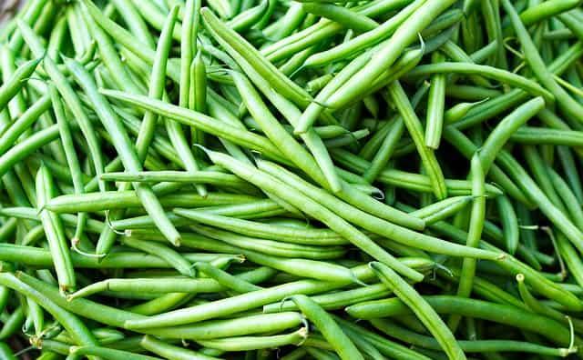 harvested pole beans