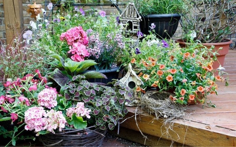 Potted Shade Flowers 20 Great Shade Loving Plants For Containers