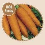 Carrot Autumn King 1000 Seeds, £2.99