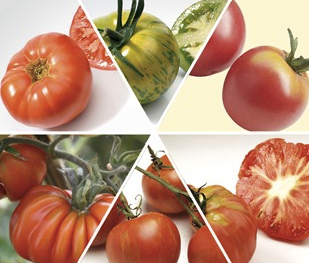 Heirloom Tomato collection from Jersey Plants Direct