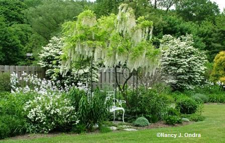51 Best Images About Moonlight Garden On Pinterest Moon Garden