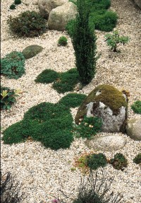Creating a Scree Garden - Rocks, Stone and Gravel in the ...