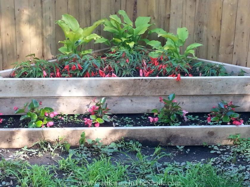 6-28 Corner Begonia Bed