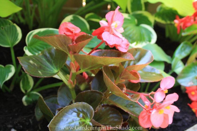 BIG Pink Bronze Leaf