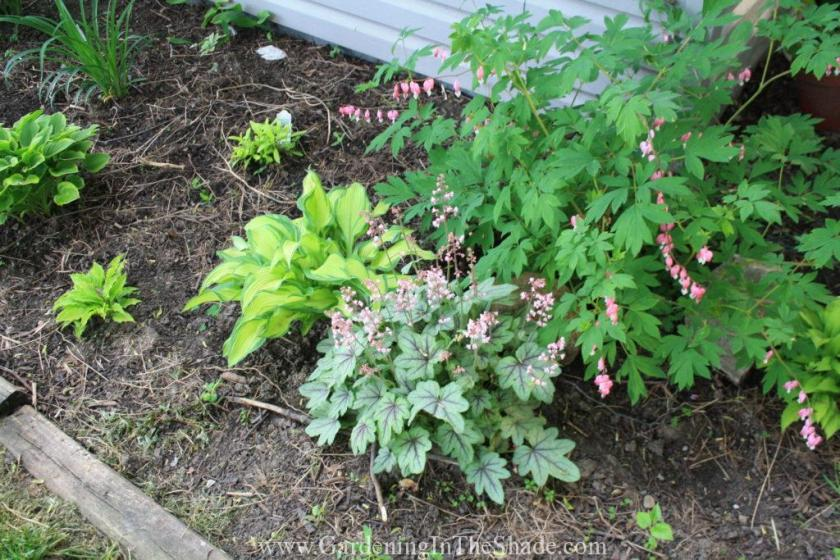 You can't see it, but lurking behind the Bleeding Heart is Lily of the Valley