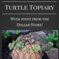 How to Make A Succulent Turtle Topiary