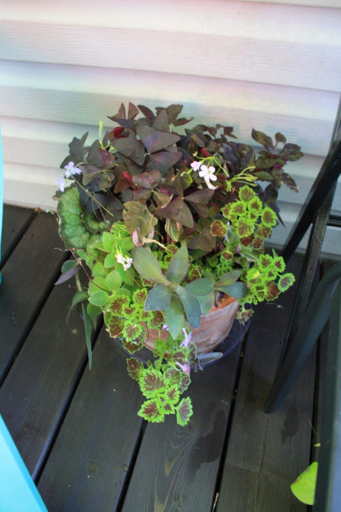 Purple and Lime Planter