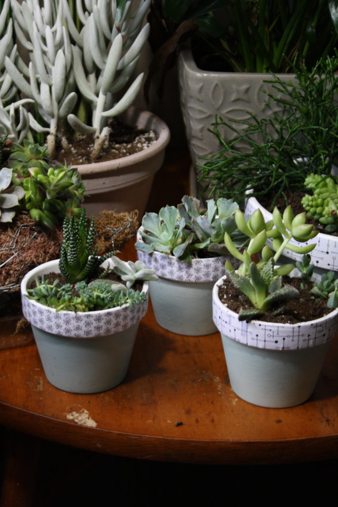 these little pots make me happy