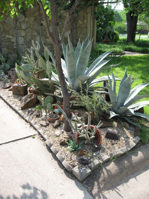 xeriscaping water-efficient