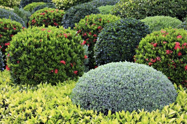 learn landscaping shrubs