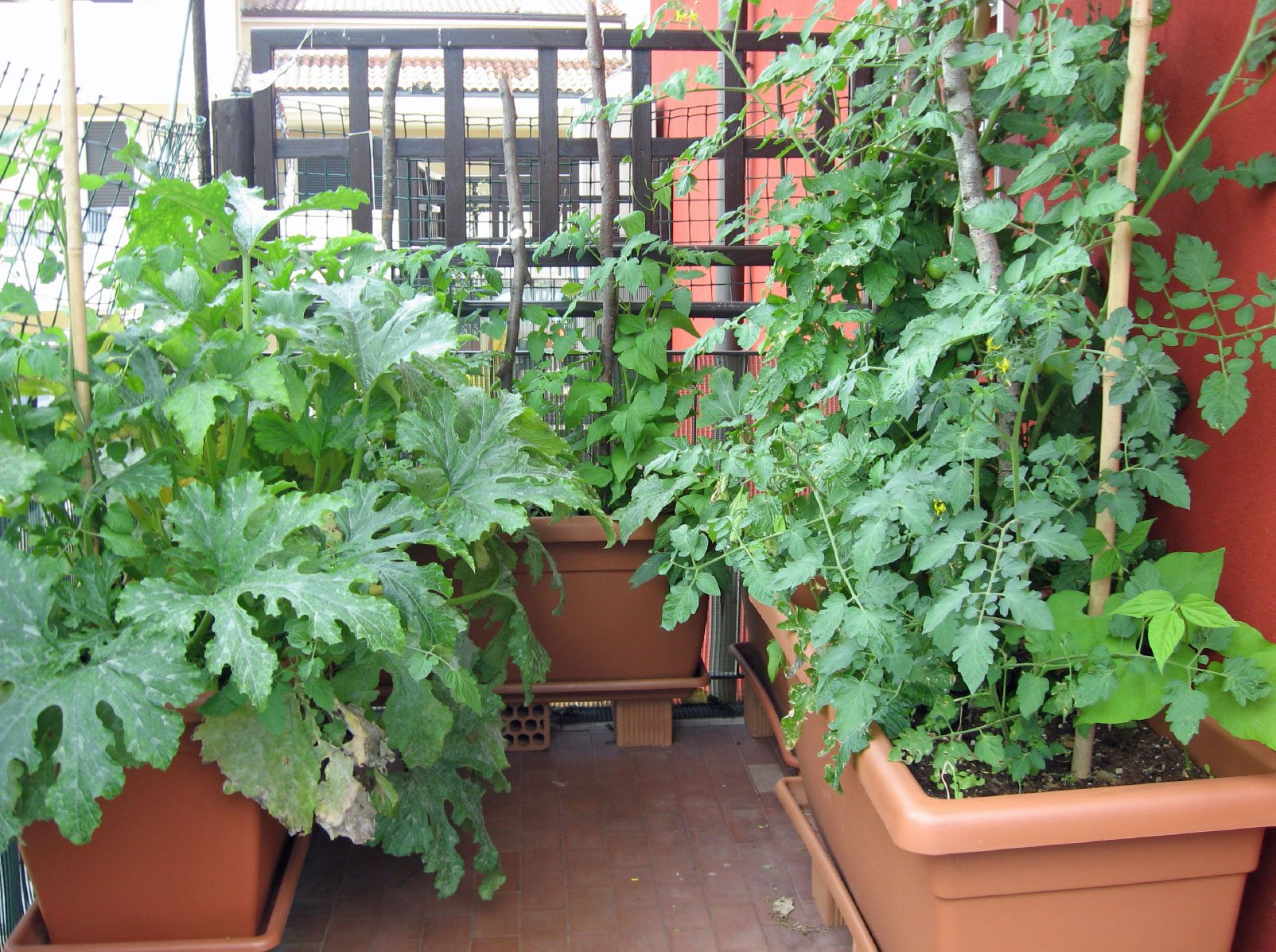 Being An Urban Gardener Creating A City Vegetable Garden