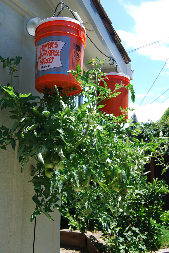 Upside Down Tomatoes How To Grow Tomatoes Upside Down