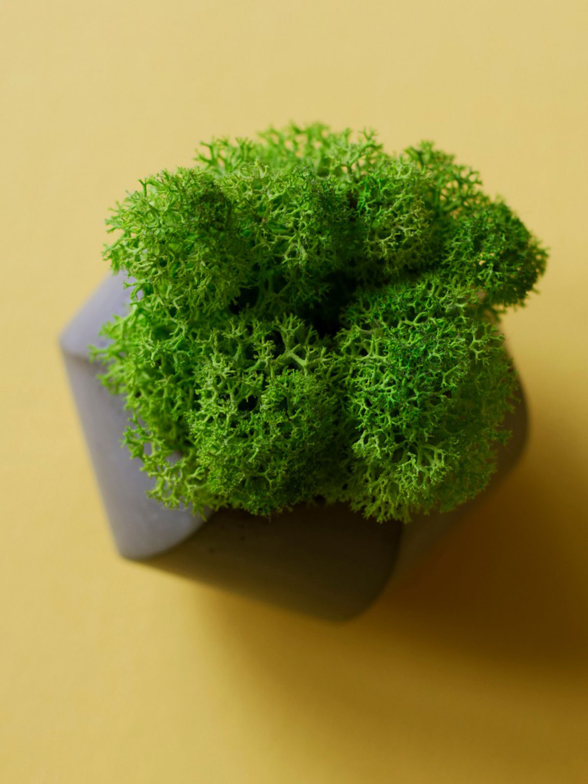 How To Grow Moss Indoors Tips For Creating An Indoor Moss Garden
