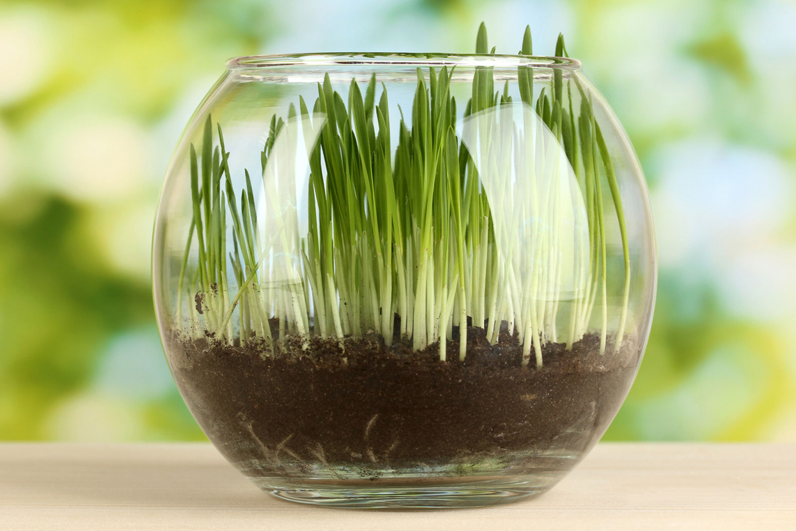 Types Of Indoor Grass What S The Best Grass For Growing Indoors