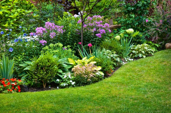 Perennial Plant Information What Is Definition Of