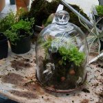 Terrarium Ideas And Supplies Tips On Building A Terrarium