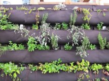 Information Diy Herb Walls - Tips Making Vertical