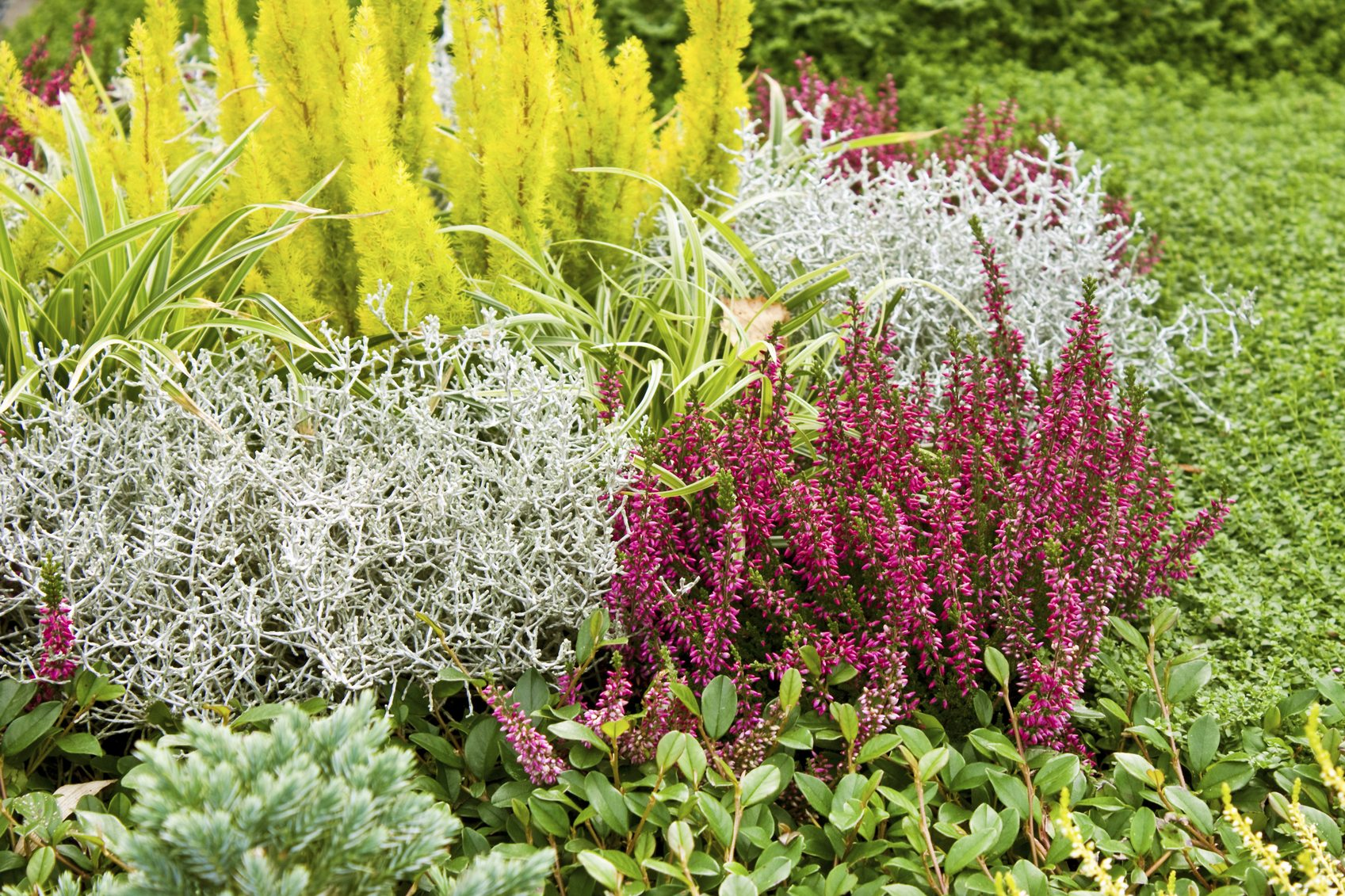 Heather Companion Plants For The Garden Learn What To Plant Next