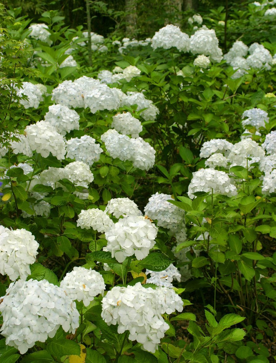 Common Flowering Shrubs For Zone 9 Picking Shrubs That Bloom In
