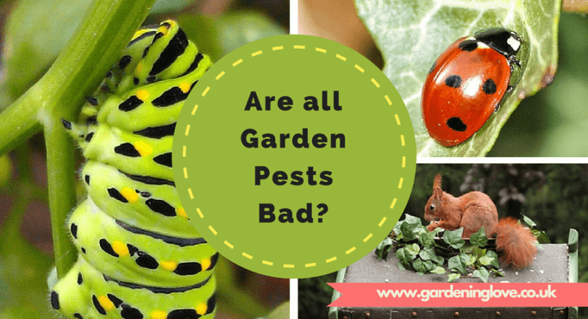 Are all garden pests bad. Garden pests are necessary for the ecosystem of your garden