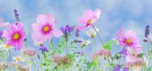 pink and purple flowers in a field with a bright blue sky