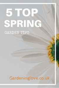 5 top spring garden tips. A daisy from underneath growing up to the sky