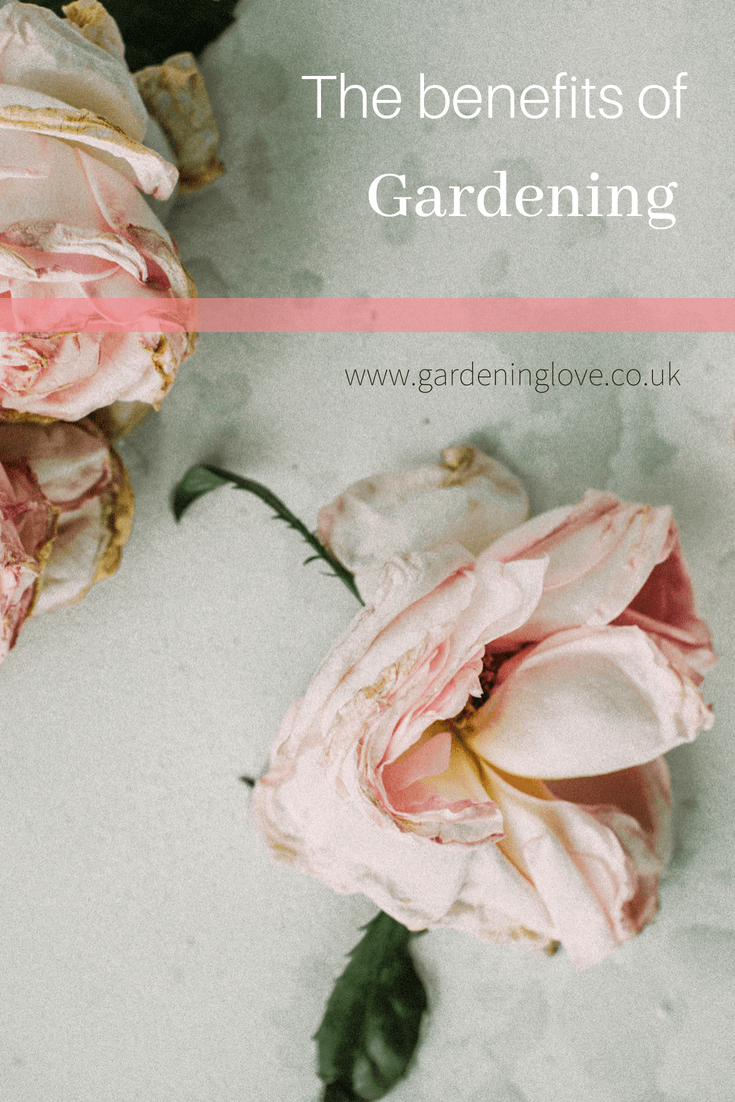 5 ways gardening is underrated. Discover how gardening benefits people of all ages and abilities, mentally, physically and spiritually. #gardening #health #mentalhealth #wellbeing #physicalhealth