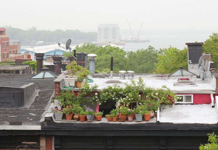 10 Secrets For Growing An Urban Balcony Garden Gardenista